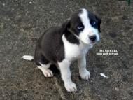 Occhi di cucciolo