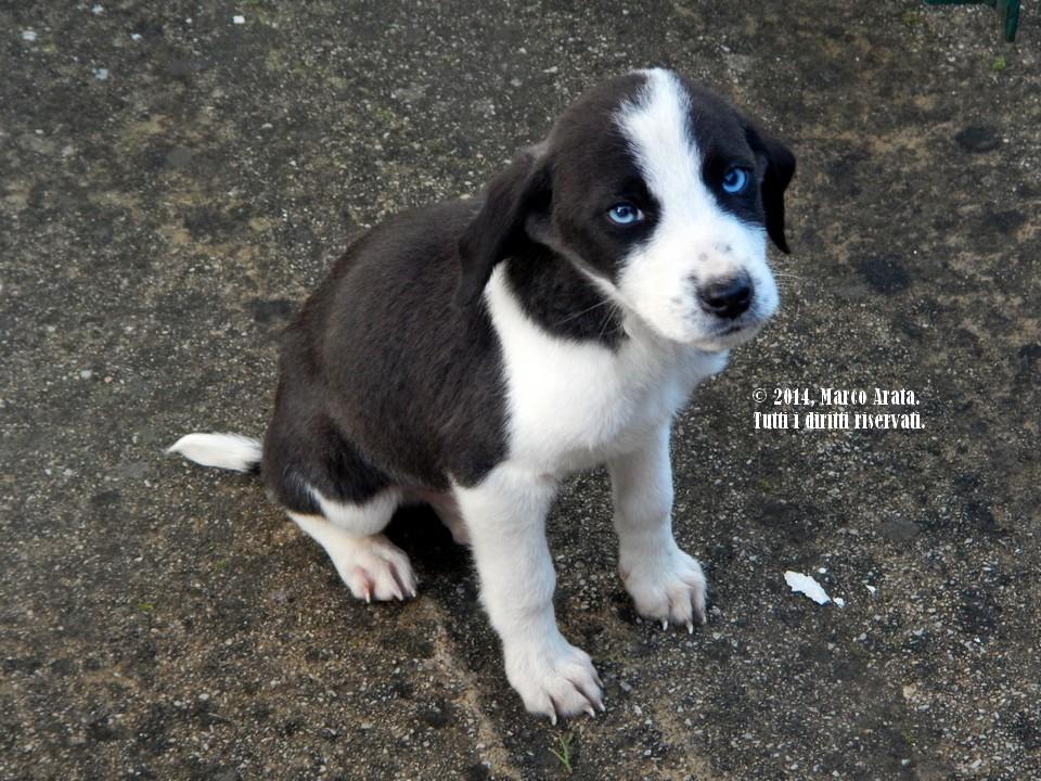 Un bellissimo cucciolo che mi ha regalato questo tenerissimo sguardo con i suoi occhioni azzurri come il mare. Data di scatto: 19/01/2014